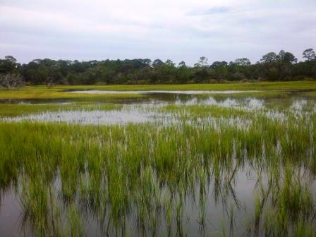 flooded-grass-flats-compressed
